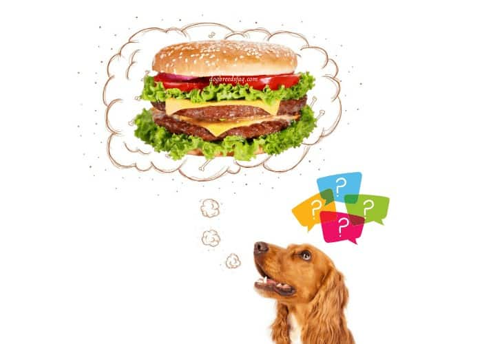 dog thinking of a cheeseburger illustration