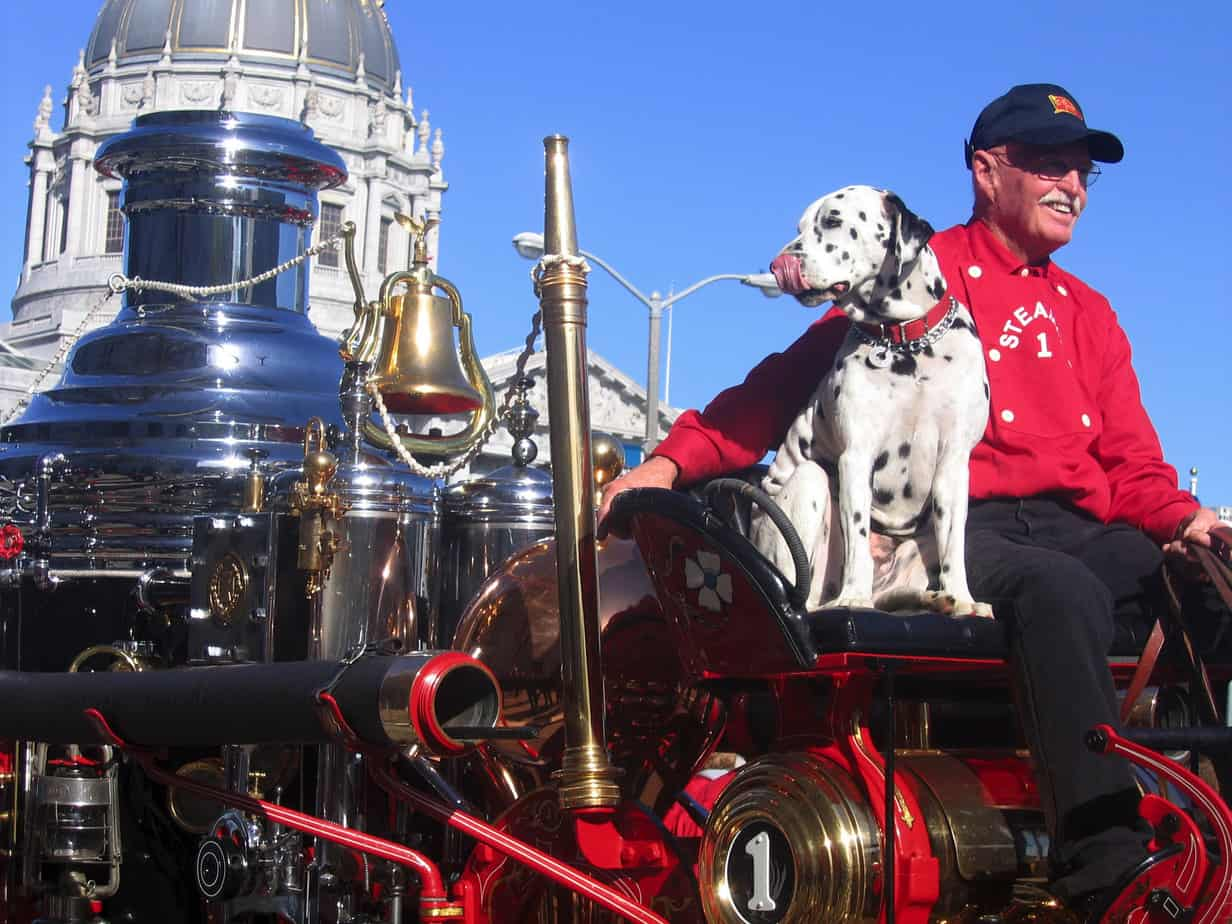 dalmatian riding on an old firetruck carriage
