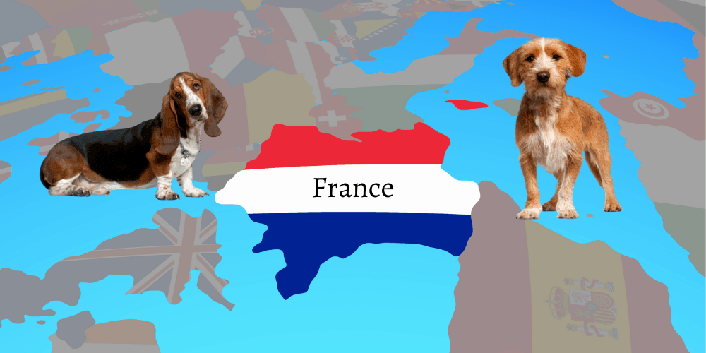 2 French dog breeds on top of the globe