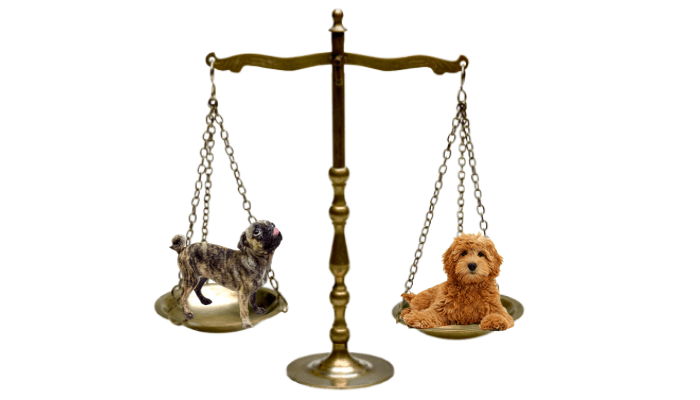 2 different dog breeds on a weighing scale