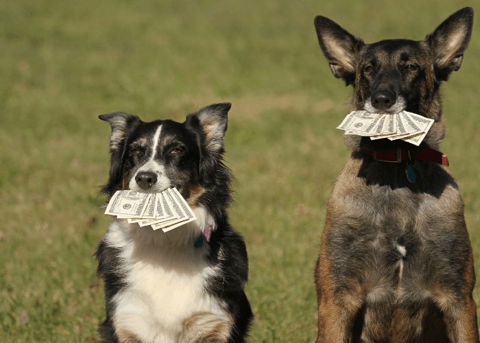 2 dogs holding money in their mouths