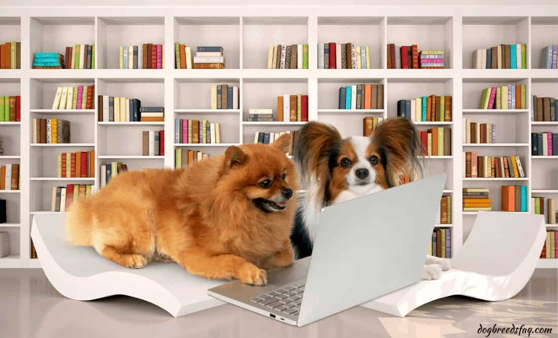 2 smartest small dogs in the library