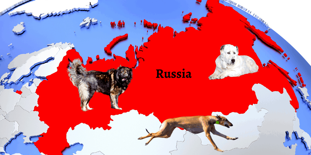3 Russian dog breeds on the map