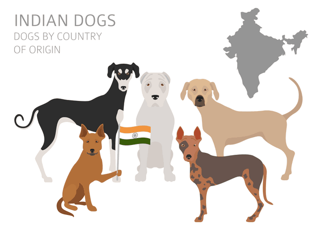 5 Indian dog breeds
