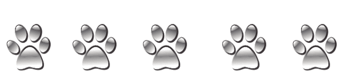 5 silver dog paw prints on white background