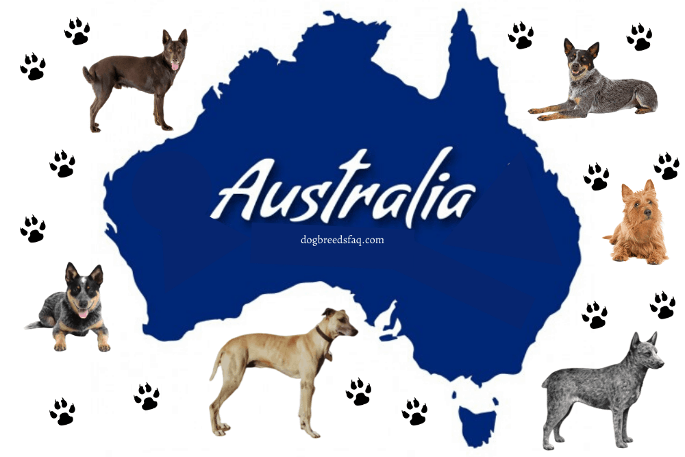6 Australian Dog Breeds, paw prints and australian map photo