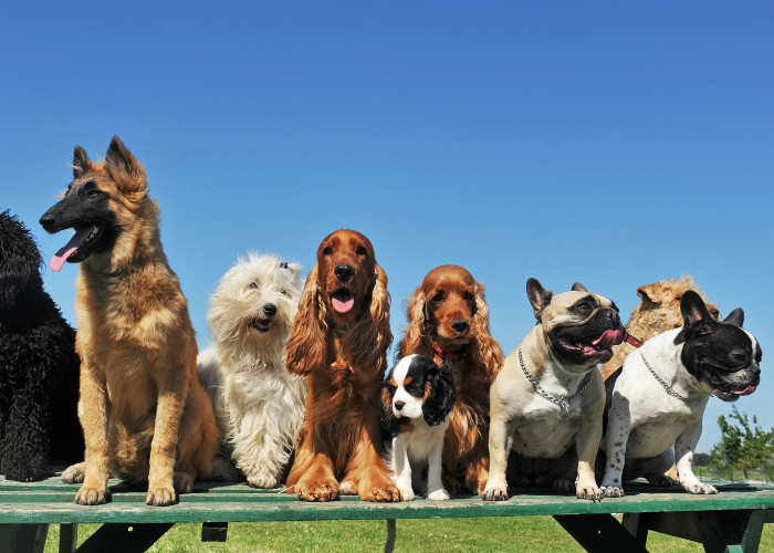 9 dogs on the bench
