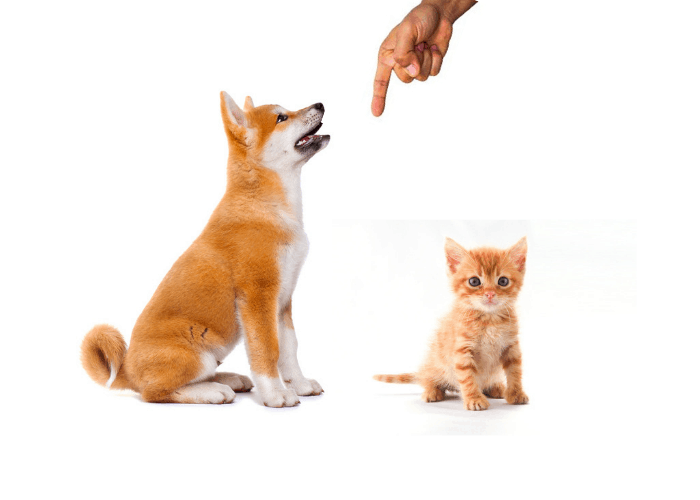 A hand pointing down and giving commands to akita puppy and kitten