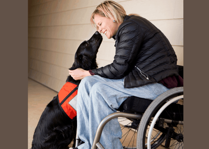 A mature woman wheelchair user with her service dog