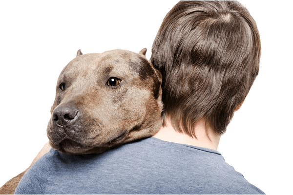 a brown pit bull is being hugged while head is on his owner's left shoulder