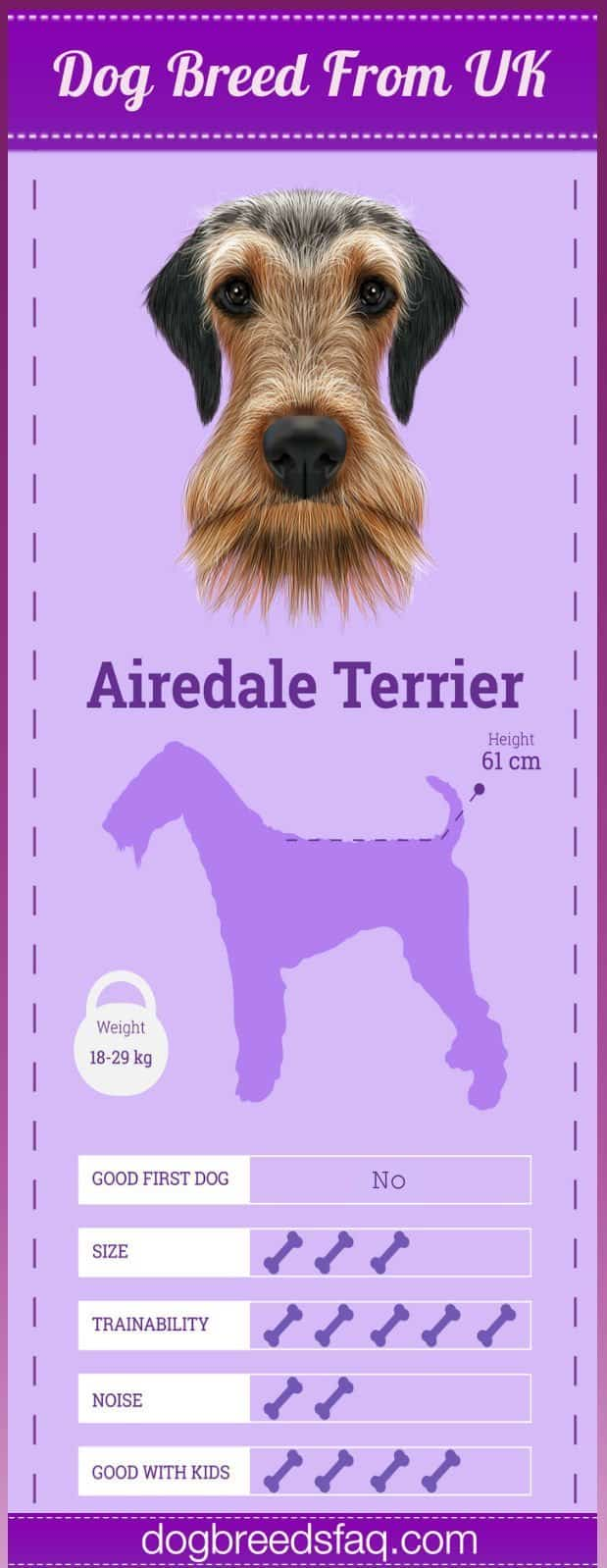 Airdale Terrier Temperament Infographic Image