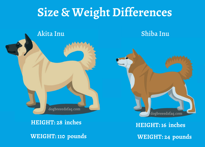 Akita Inu vs Shiba Inu size and weight differences