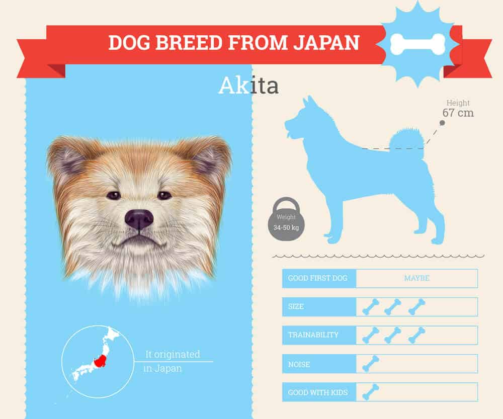 Akita dog breed Infographic