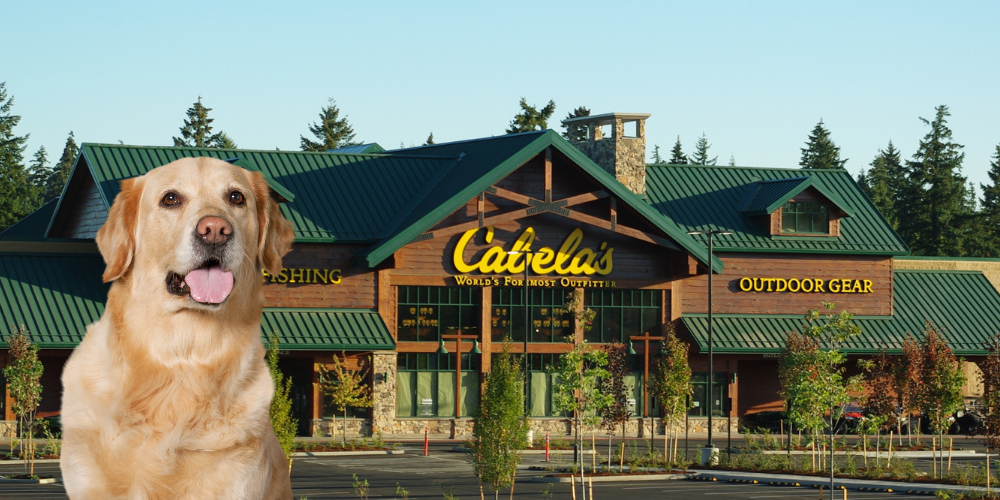 Are Dogs Allowed in Cabela's featured image
