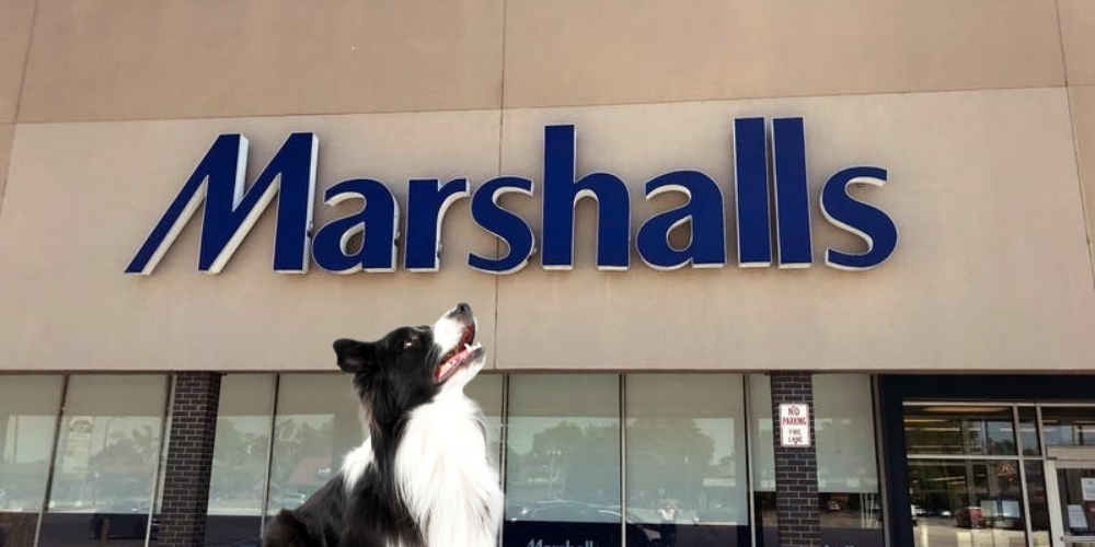 Are Dogs Allowed in Marshalls image
