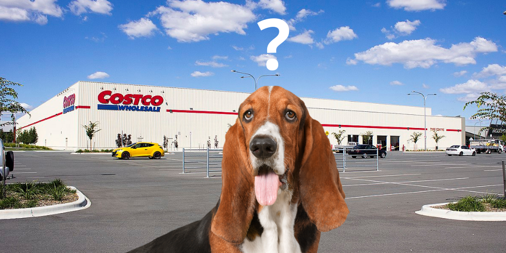 Are dogs allowed in Costco featured image