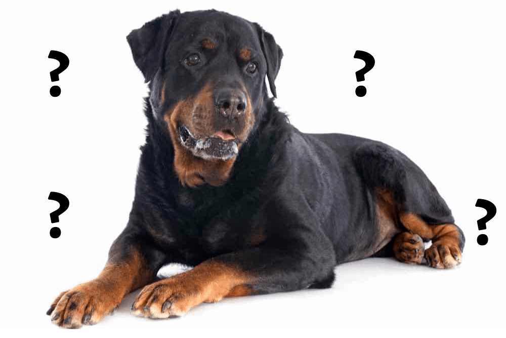 Are rottweilers dangerous image