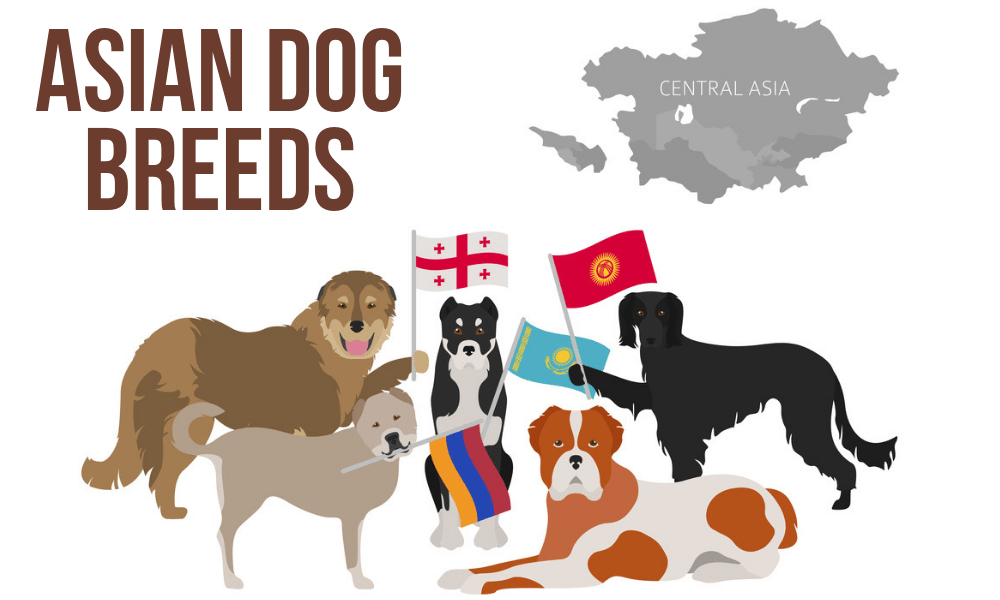 Asian Dog Breeds
