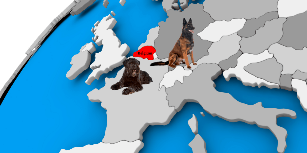 2 Belgium dog breeds on top of the globe