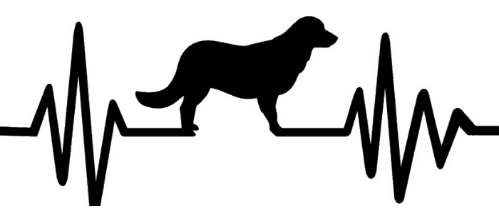 Black golden retriever with heartbeat and pulse line silhoutte