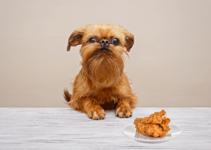 Brussels Griffon looking and a fried chicken on a plate