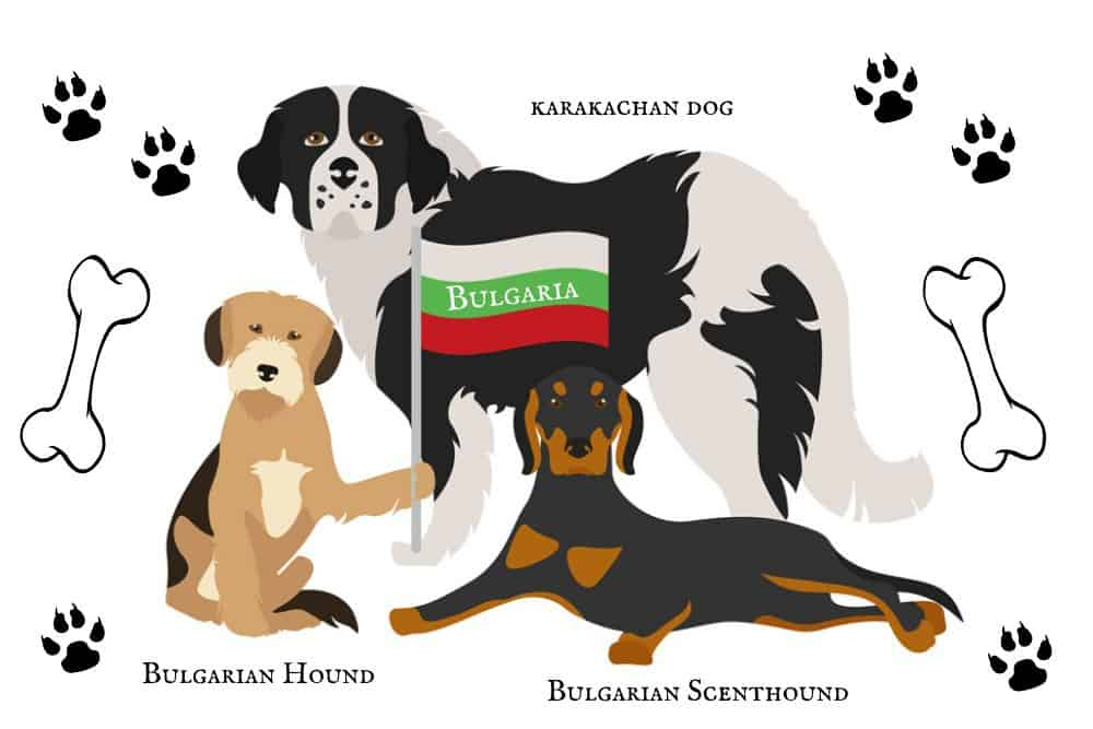 3 Bulgarian Dog Breeds with a flag, paw prints and bones on background