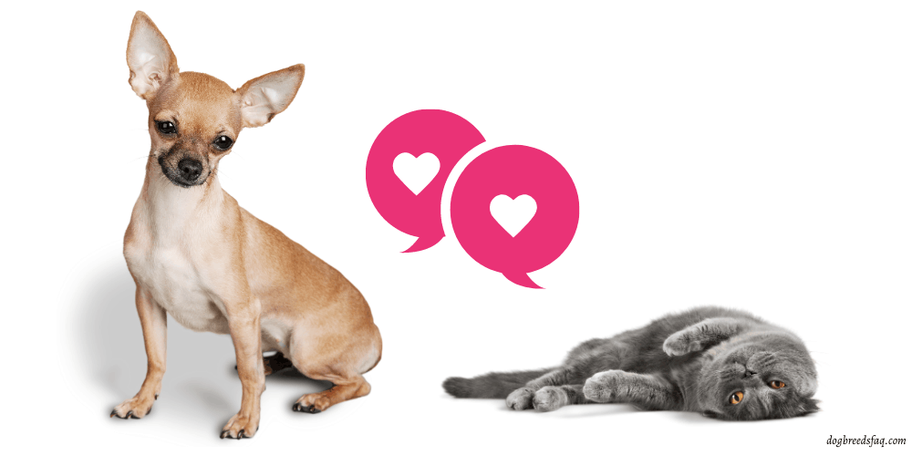 Can Dogs and Cats Breed