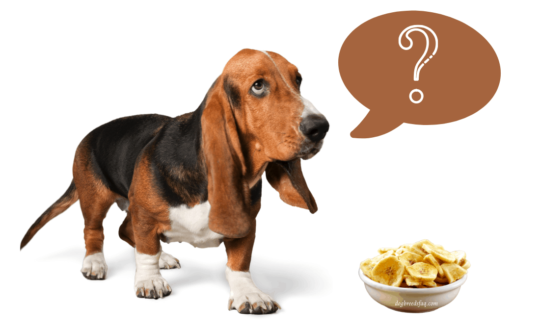 Can dogs eat banana chips image