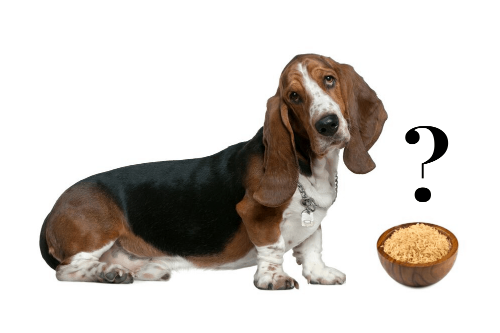 Can dogs eat brown rice image
