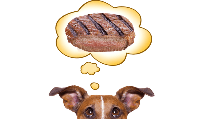 Can dogs eat medium steak image