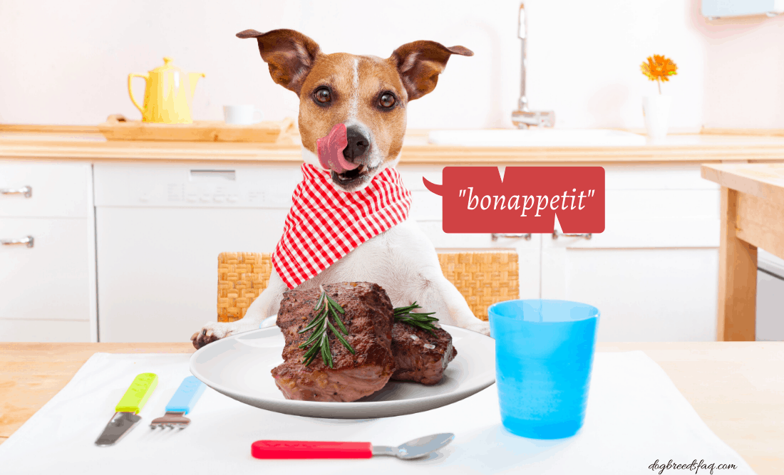 Can dogs eat steak photo illustration