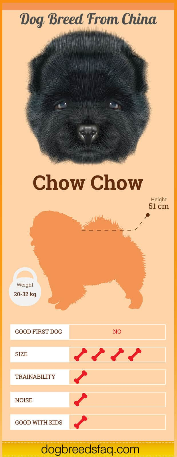 Chow Chow Dog breed Infographic