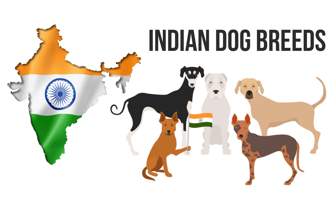 Cute Dog Breeds Native to India