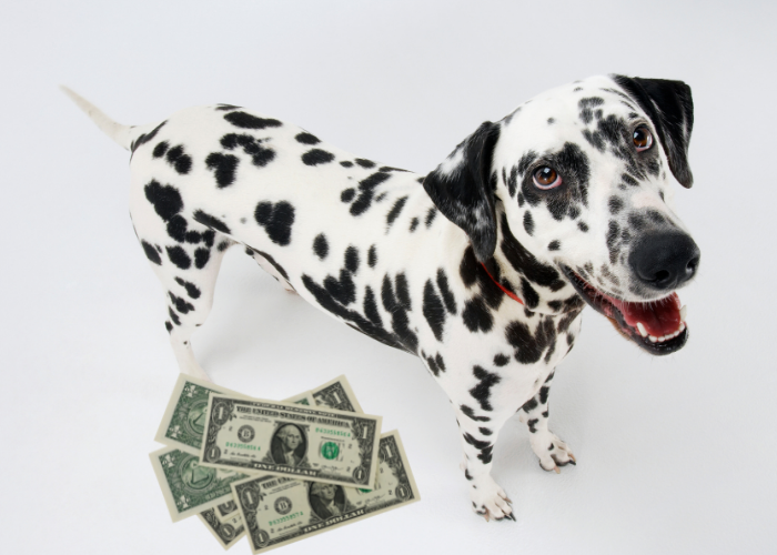 Dalmatian with dollars near its right foot