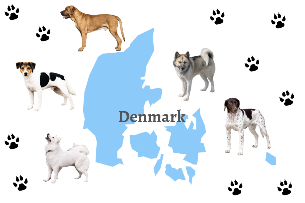 5 Danish Dog Breeds