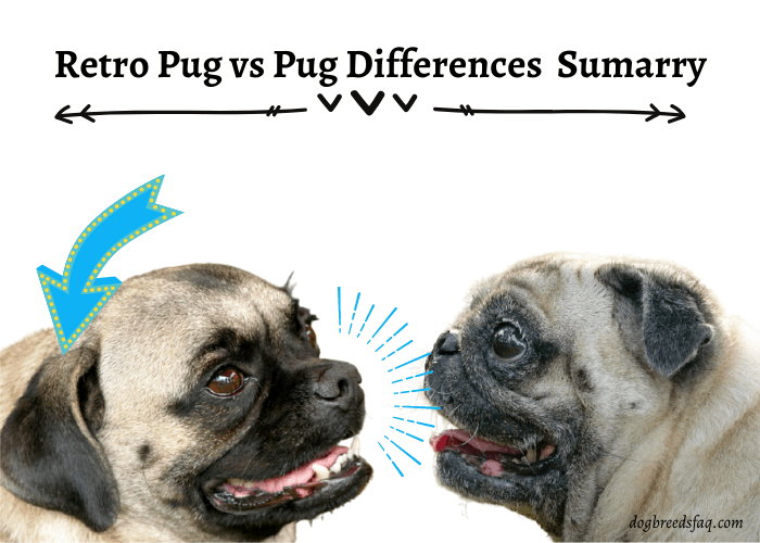 Differences Between A Retro Pug And  Pug (Summary)