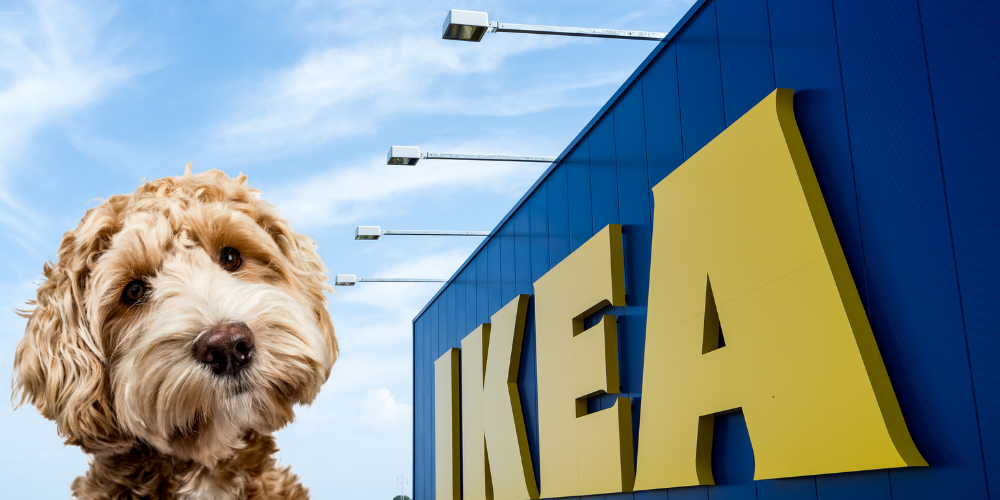 Does IKEA Allow Dogs featured image