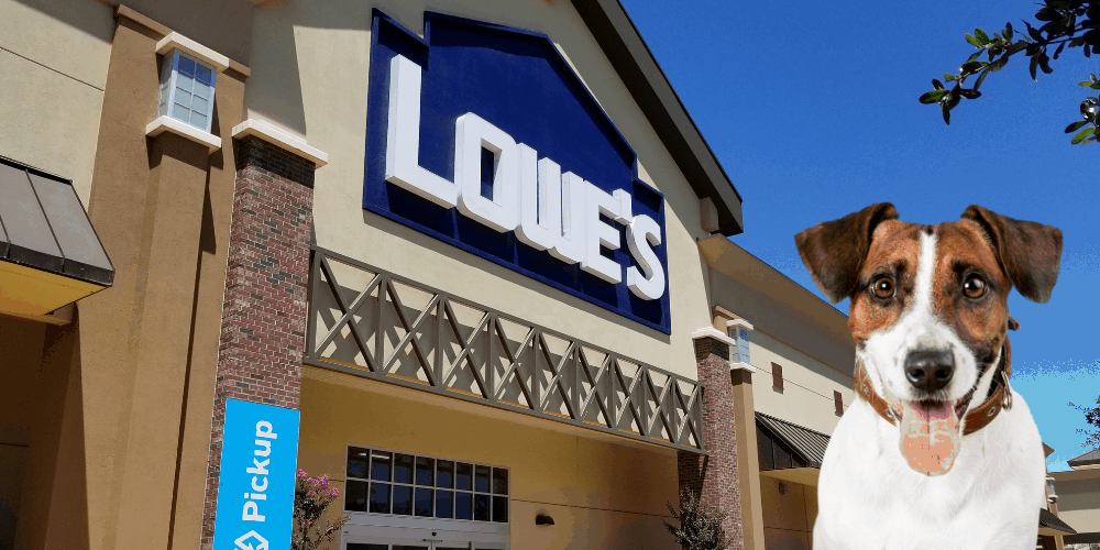 Does Lowe's Allow Dogs featured image