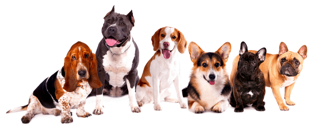 6 different dog breeds photographed against a white background