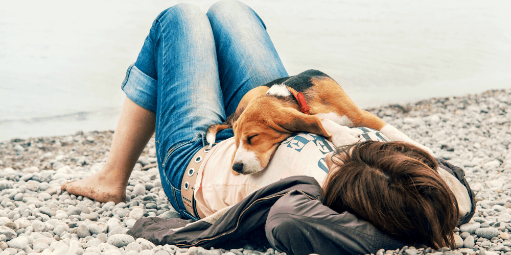why Dogs Sleep On Top Of Their Owners image