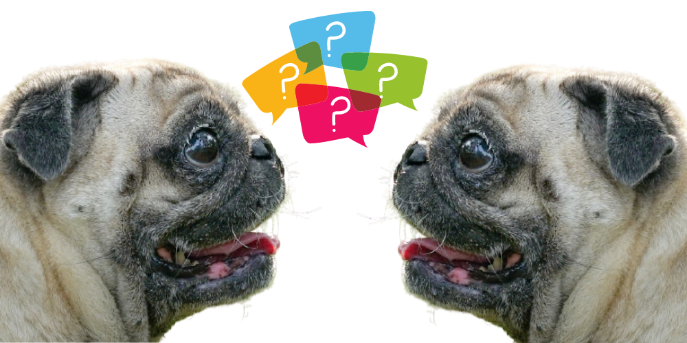 Dogs that Look Like Pugs featured image