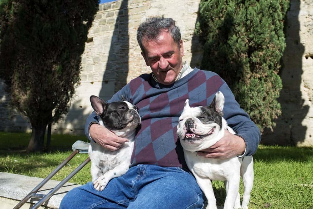 Elderly man with his 2 French Bulldogs