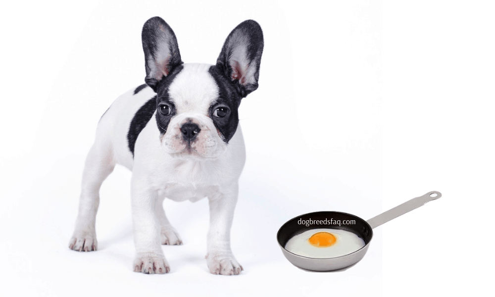 French bulldog and fried egg in a pan