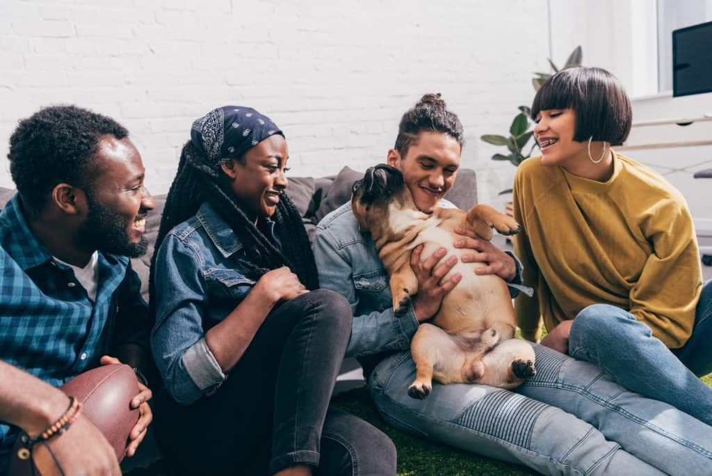 French bulldog sitting and playing on owner's lap and friends laughing