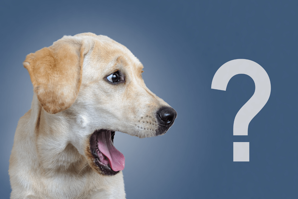 Frequently Asked Dog Questions image