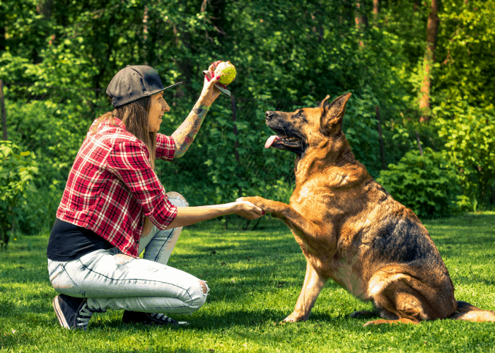 German Shepherd dog training at the park