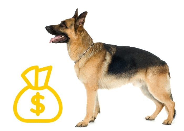 German Shepherd with dollar in a pouch sign