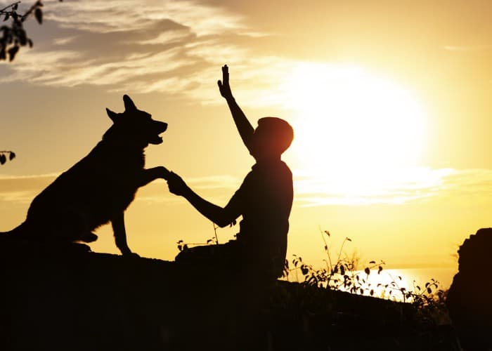German shepherd training silhoutte