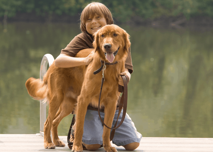 Golden retriever being hugged by a boy
