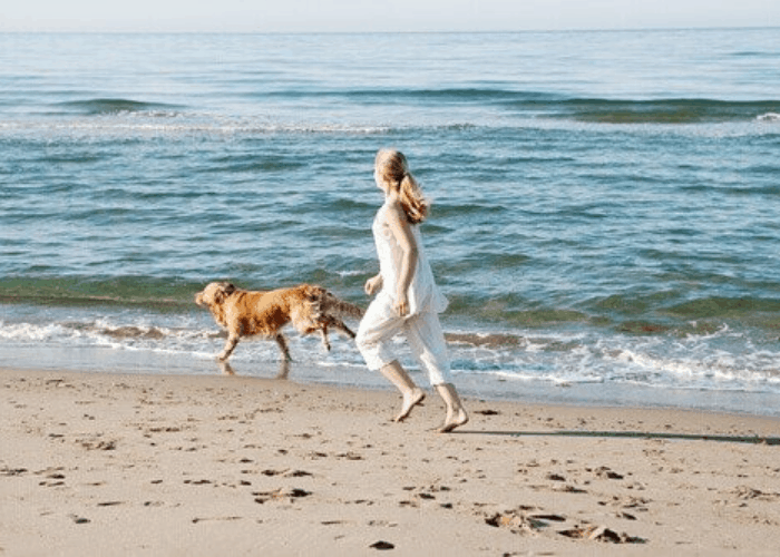 Golden retriever exercising with lader owner on the beach